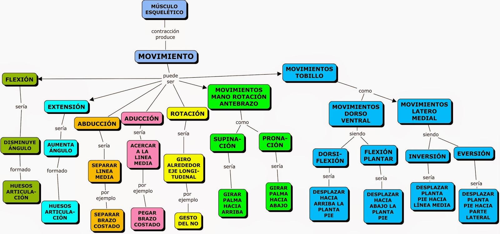 MAPAS CONCEPTUALES SOBRE SISTEMA MUSCULAR (CMAPS OF MUSCULAR SYSTEM ...