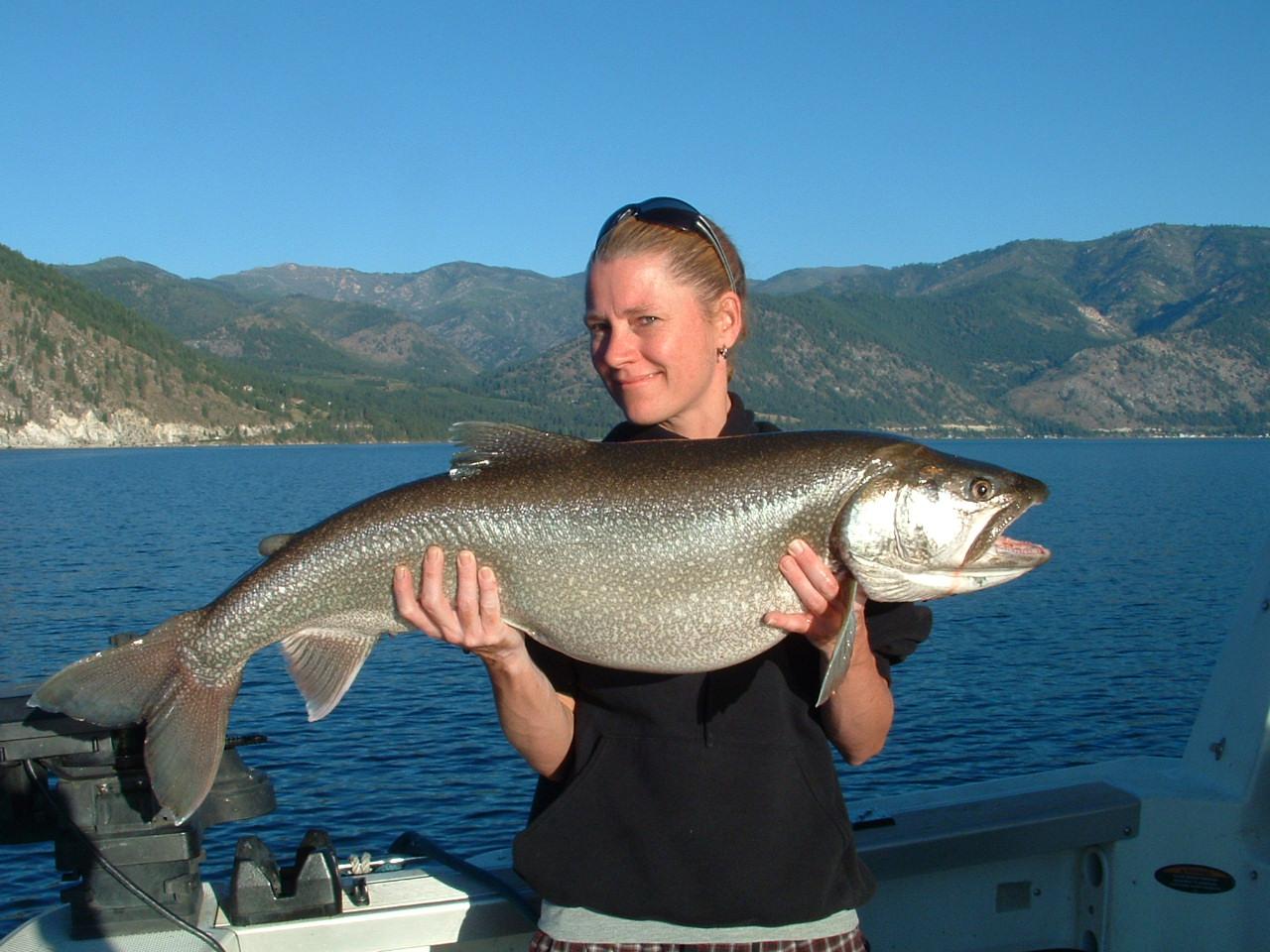 Northwest salmon and steelhead fishing nice lake chelan for Lake chelan fishing