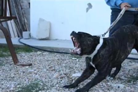 gambar awas bahaya gigitan anjing galak