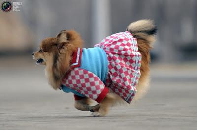 Funny Dressed Up Dog