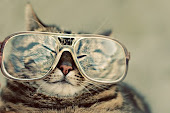 funny cats with glasses