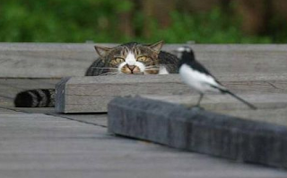 funny picture: cat and bird