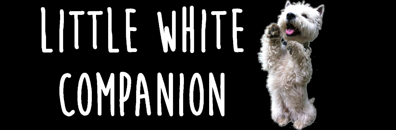 Little White Companion
