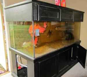 giant aquariums custom 500 gallon aquarium for sale