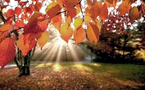 De herfst tag- Video