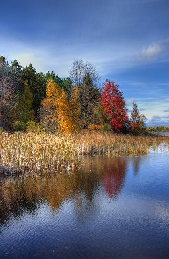 Wetland in autumn
