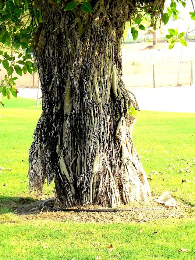 Al Bida Park -best parks in Doha