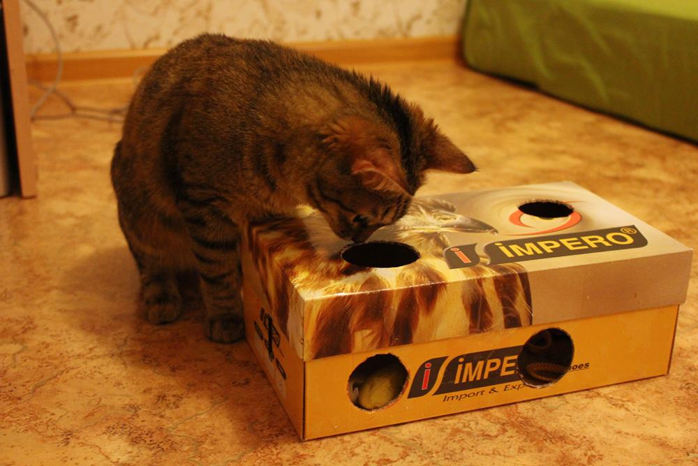 Игрушка коробка для кота своими руками