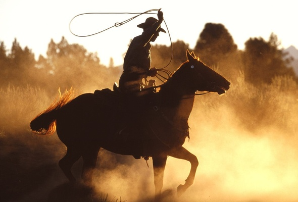Rodeo horses wallpaper the horse whinnied at the