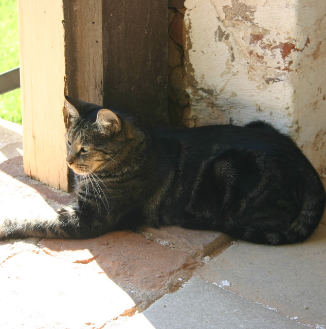 Shirley Plantation's cat