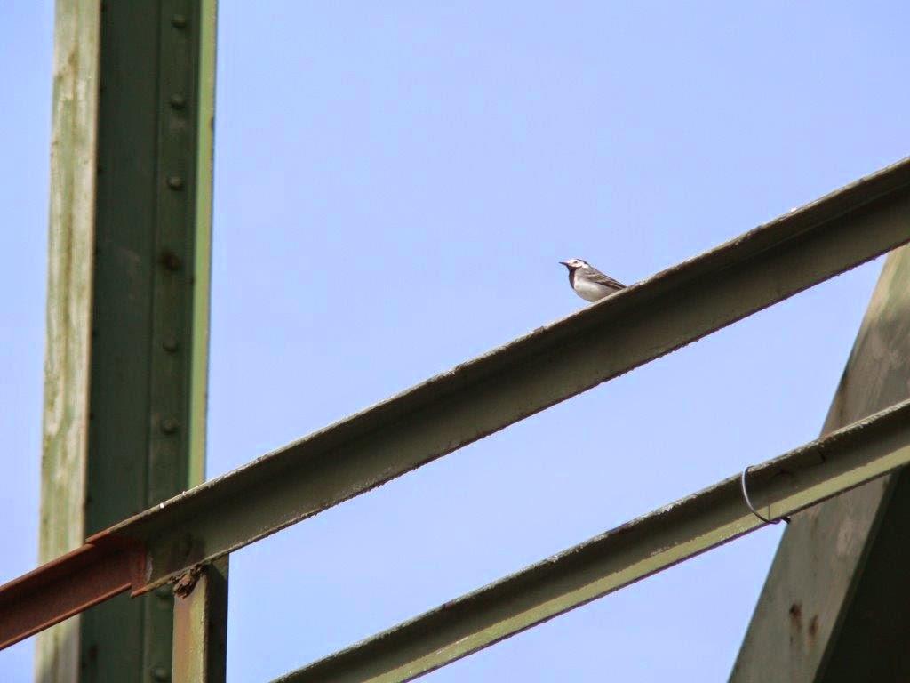 Depression kleine Schritte Kanal Dortmund Frühling Antidepressiva Hund Vogel Brücke