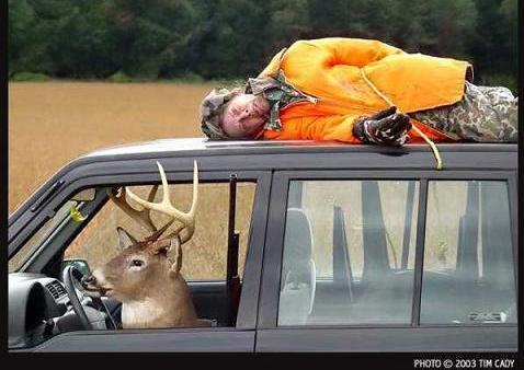 deer,animal,animalia,chordata,mammalia,eutheria,pecora,cervidae,Artiodactyla