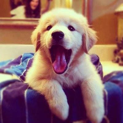 Hình cún con dễ thương