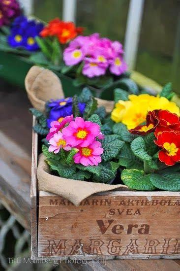 Bem vinda primavera for Rincones de jardines con encanto