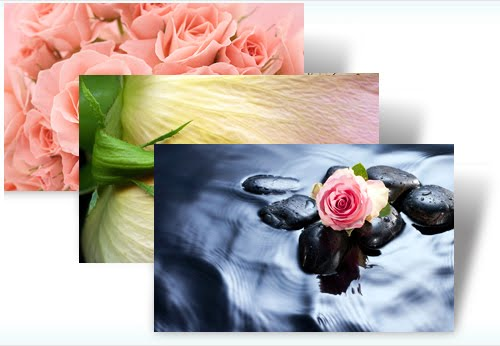 roses themes for windows 7