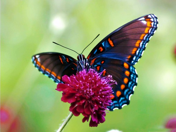 Animals Other Colorful Butterfly Image HD Wide