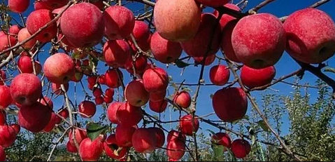 Name and Benefits for Prune Fruit