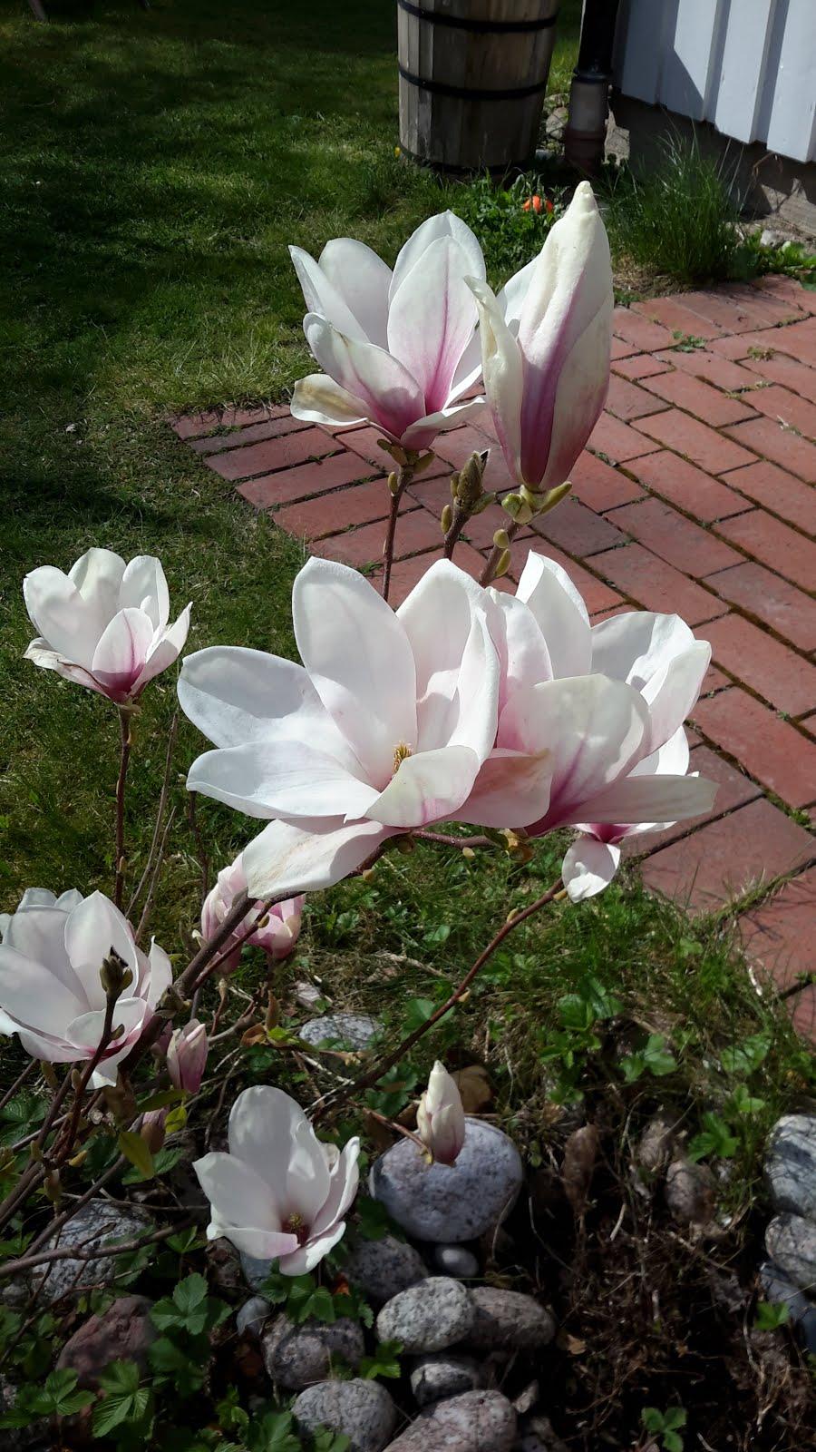 Blogg om trädgård, pyssel, mat och min funkisfamilj
