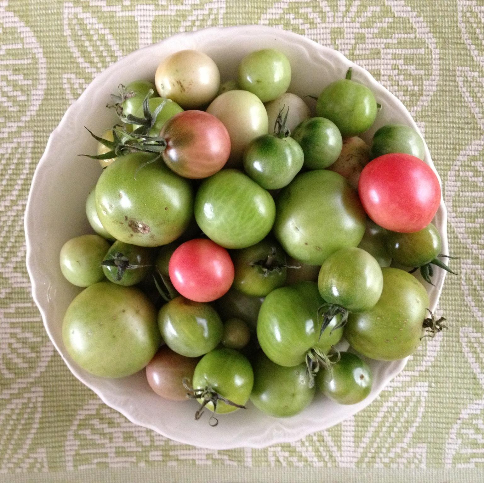http://www.rubbercowgirl.com/2012/10/green-tomato-salsa.html