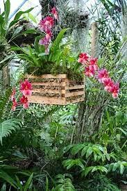 Canastos o macetas para cultivar orquideas