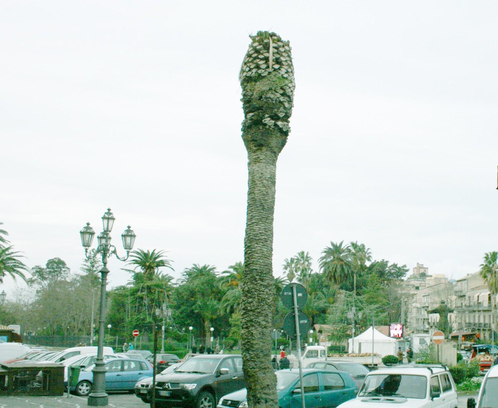 Citt nuove corleone corleone il punteruolo rosso attacca le palme di piazza falcone e borsellino - Il giardino di piazza falcone ...