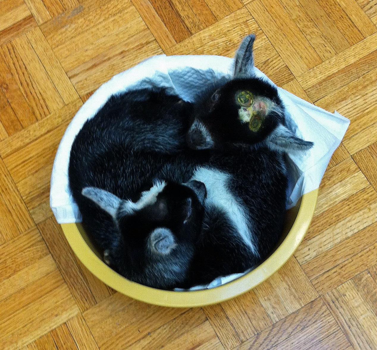 Babies in a Bucket