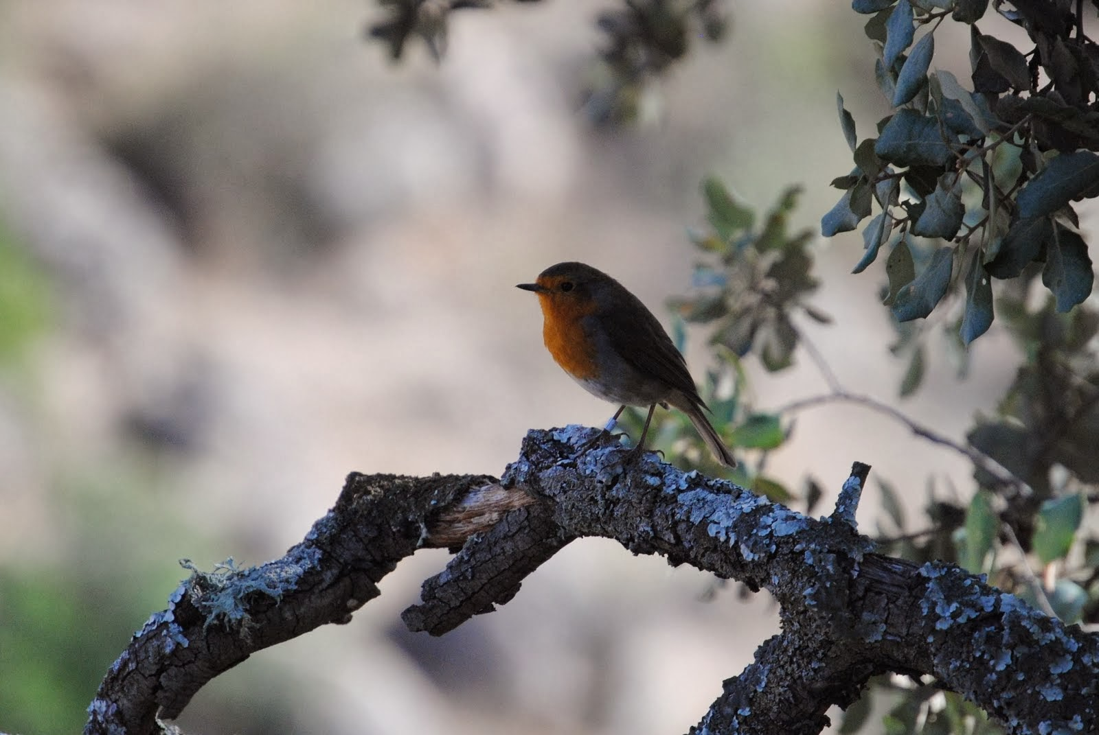 Enciclopedia de las Aves de La S.E.O.