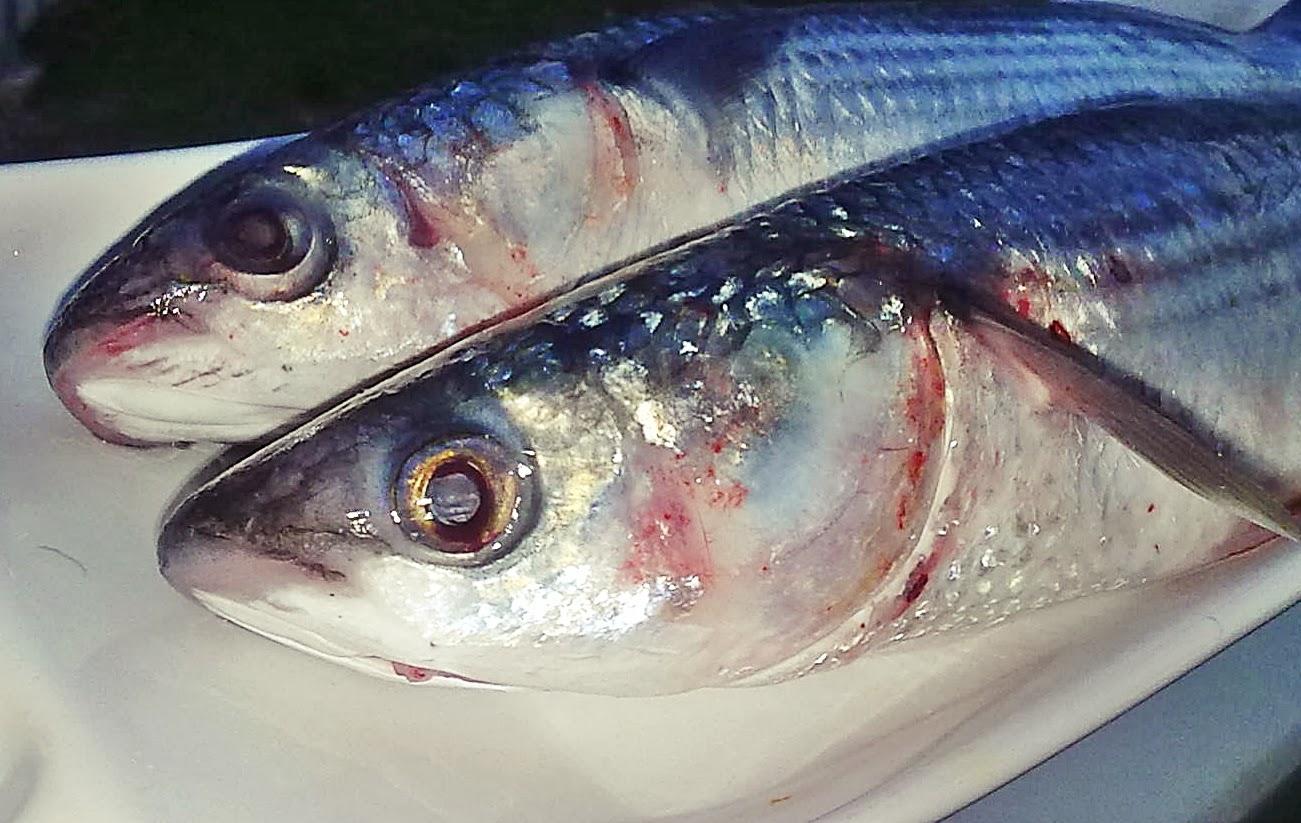 Jöleli karaciğer veya balık nasıl hazırlanır