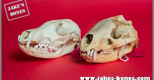 www.jakes-bones.com