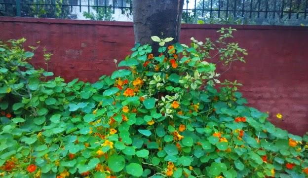 rainy delhi 1