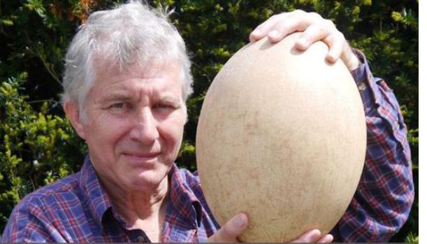 50k Harga Bagi Telur Terbesar di Dunia