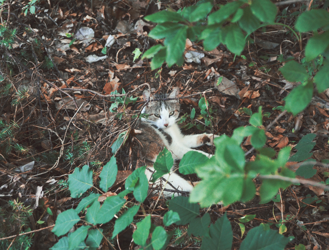 The Flying Clubhouse: The Woods at the Edge of the Meadow // The Feline Stinkeye
