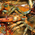 How To Cook Live Lobster