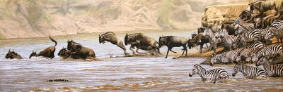wildebeest and zebra crossing river