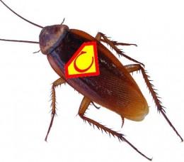 Mejor modo de exterminar cucarachas