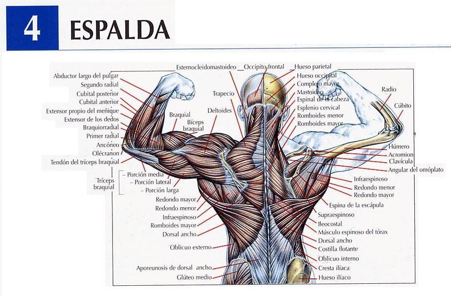 Gasali Training Center: Movimientos Para Espalda