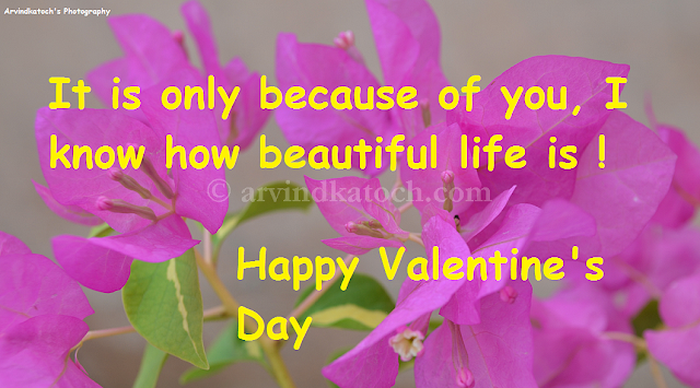 Card, HD, Valentine Day, Beautiful Life