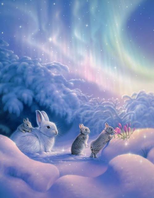 belle image de lapins