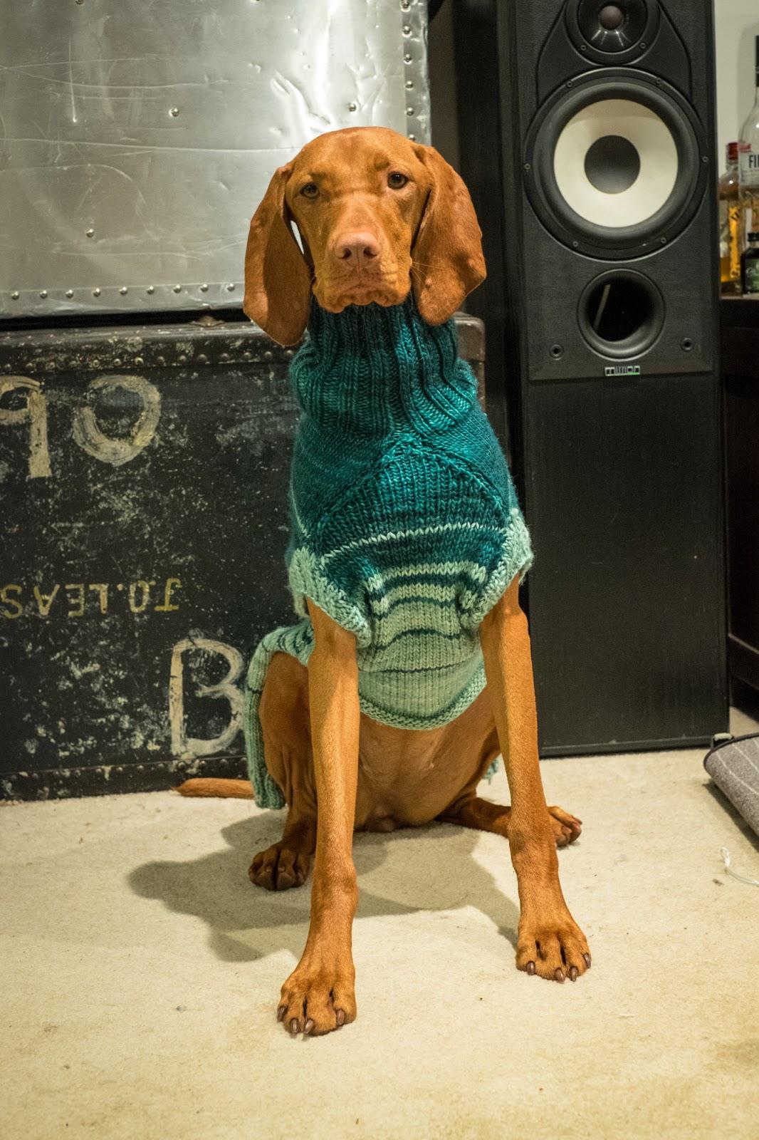 Whiskey Girl --- the Vizsla Puppy: Knitting a dog sweater for a Vizsla