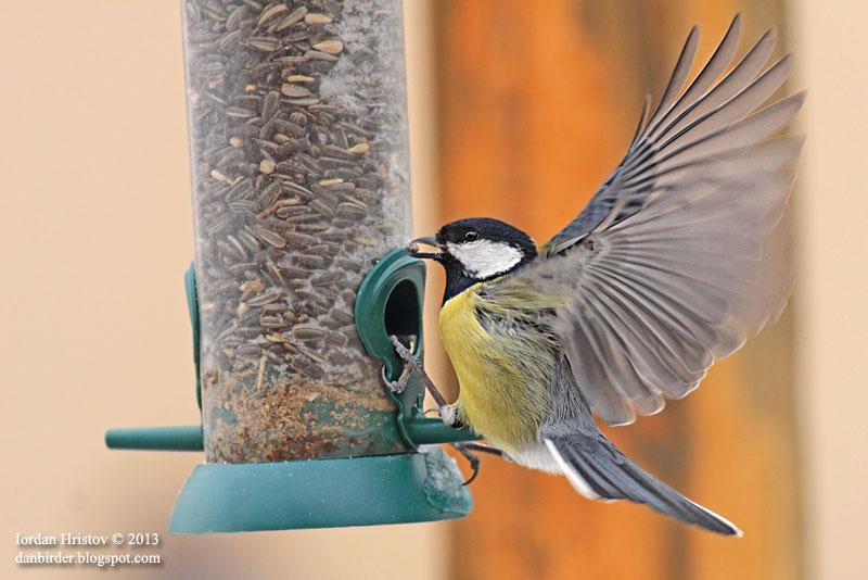 bird photography trips in Bulgaria