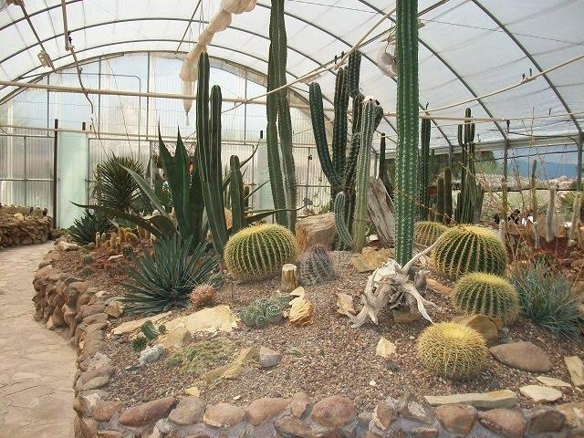 De todo un poco jard n bot nico de cactaceas en el for Jardin del desierto