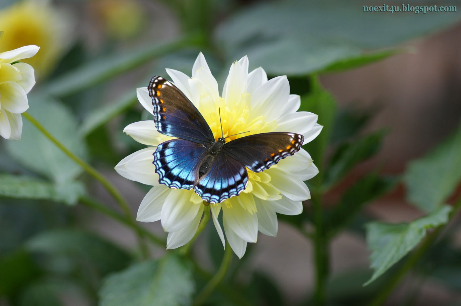 butterfly on a flower wallpaper (hd) ~ noexit4u