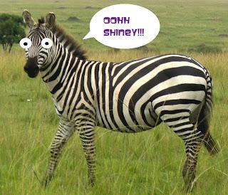 gambar lucu zebra