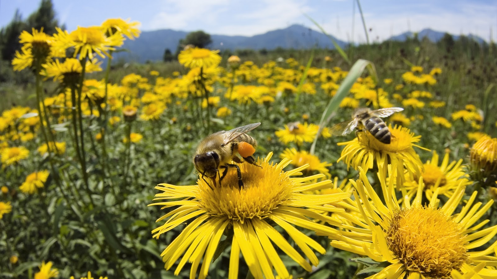 The Bee Is More Honoured Than Other Animals