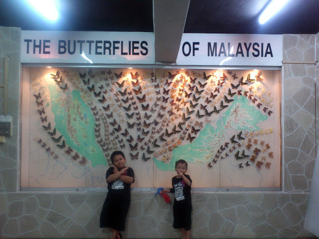 The butterflies of Malaysia