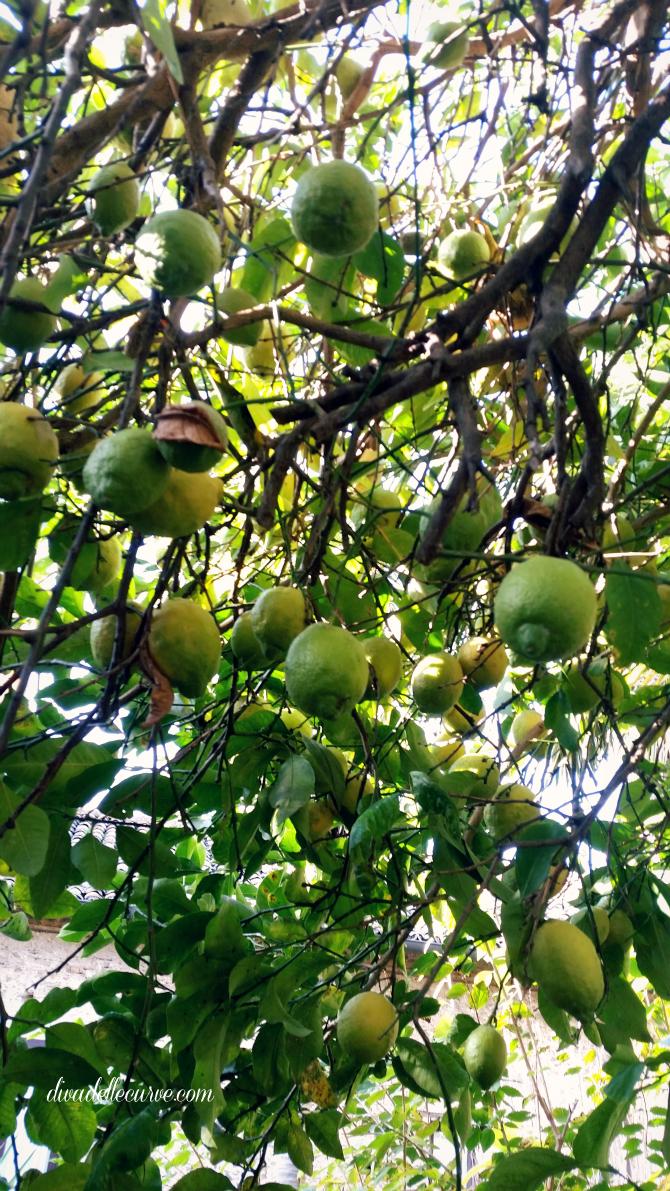 giardino mediterraneo con albero di limoni