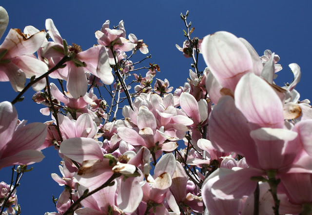 """blossom-afinetangle-spring""width=""640"""