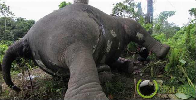 5 Binatang Langka yang Tercancam Punah di Pulau Sumatera Indonesia