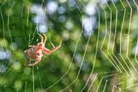 Kisah Teladan Siasat Laba-laba