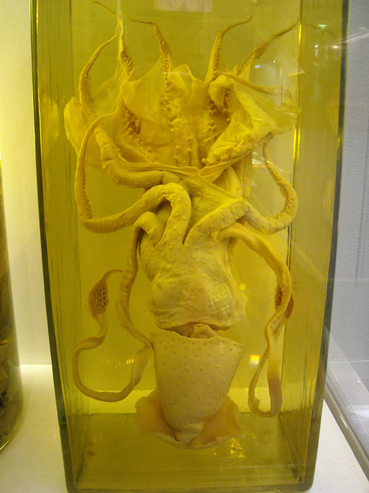 Squid In A Jar